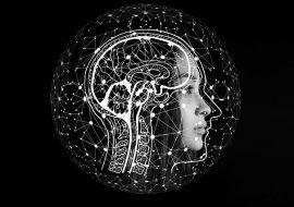 evolución del cerebro humano estudio científico